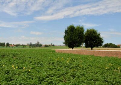 Looking towards the village of Messines from Bethleem Farm East Cemetery