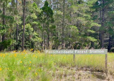 Passchendaele Forest Station sign at Passchendaele, Queensland